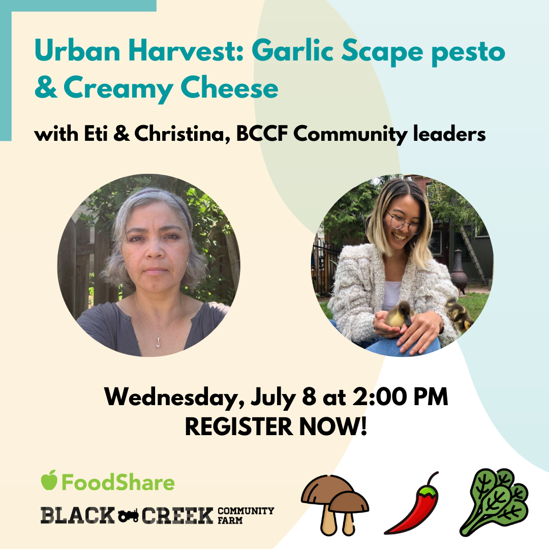 Title text reads: Urban Harvest: Garlic Scape pesto and Creamy Cheese with Eti and Christina, BCCF Community leaders. Separate images of Eti & Christina. Date: Wednesday, July 8, 2020. Register Now! - with Black Creek Community Farm logo, and image of cartoon vegetables next to it