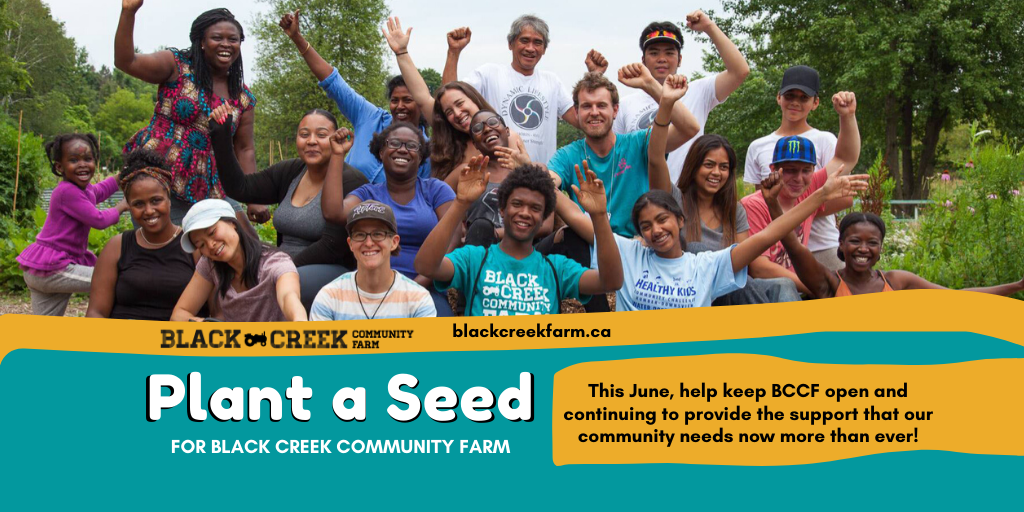 Photo of BCCF farm staff and community members outside on a bright sunny day with their arms raised in celebration. Text reads: Plant a Seed for Black Creek Community Farm. This June help keep BCCF open and continuing to provide the support that our community needs now more than ever.