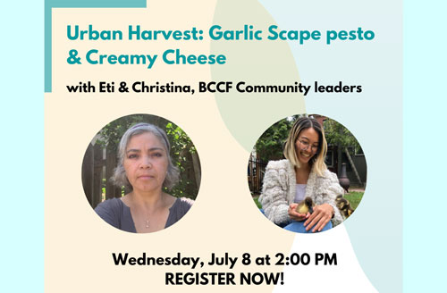 Title text reads: Urban Harvest: Garlic Scape pesto and Creamy Cheese with Eti and Christina, BCCF Community leaders. Separate images of Eti & Christina. Date: Wednesday, July 8, 2020. Register Now!