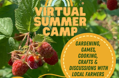 -Background image is a raspberry bush. -Poster title reads: virtual Summer Camp -Gardening, games, cooking, crafts and discussions with local farmers through the Black Creek Community Farm. -camp runs from August 5th to August 21- every Monday, Wednesday and Friday