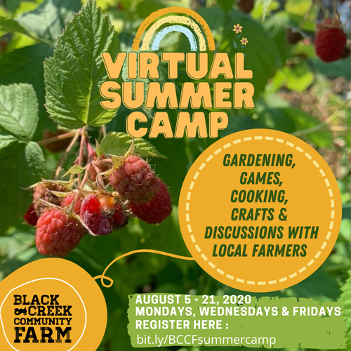 -Background image is a raspberry bush. -Poster title reads: virtual Summer Camp -Gardening, games, cooking, crafts and discussions with local farmers through the Black Creek Community Farm.  -camp runs from August 5th to August 21- every Monday, Wednesday and Friday  -time is To be determined  -registration now open via http://Bit.ly/BCCFsummercamp