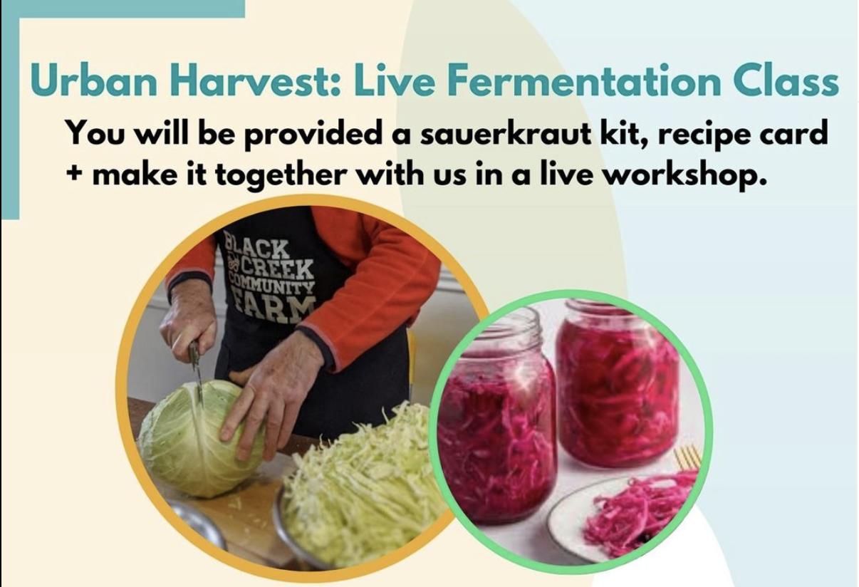 Live fermentation Urban Harvest workshop